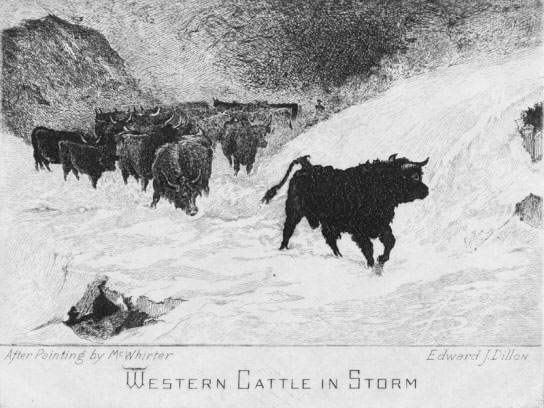 Western Cattle in the Storm