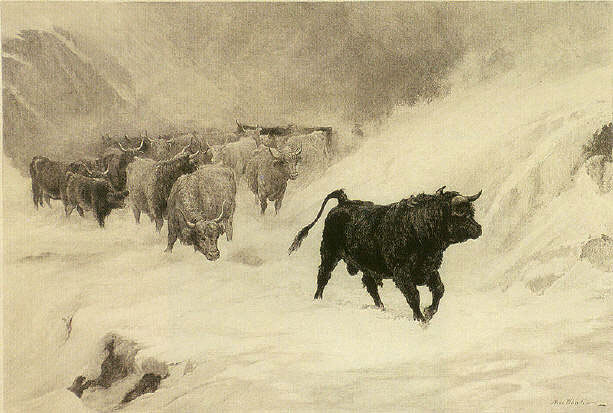 292 McWhirter Painting Western Cattle in a Storm