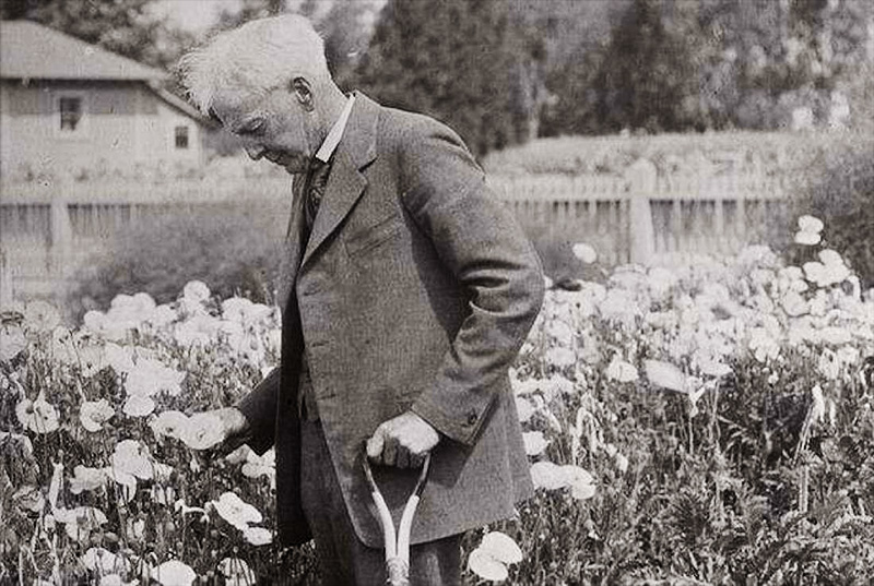 Luther Burbank stamps